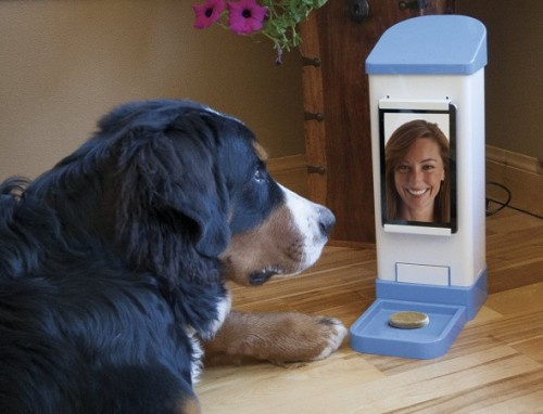 End Pet Separation Anxiety with iCPooch