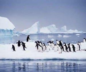 Google Maps Adds Panoramic Street View to Antarctica