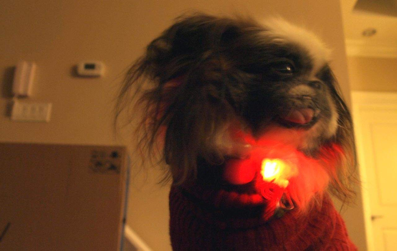 MEGATech Reviews: Nite Leash and Nite Collar LED Fiber Optic Dog Safety Products